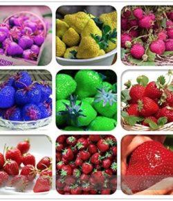 Neon Color Strawberries